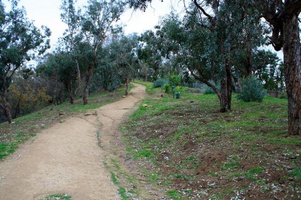 wildflower trail